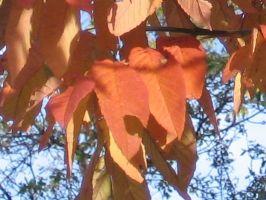 fall06092461t.jpg
