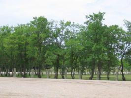 greentreest.jpg