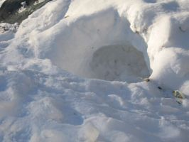 snowbackyard3t.jpg