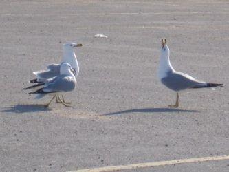 birds22.jpg