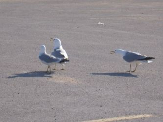 birds33.jpg